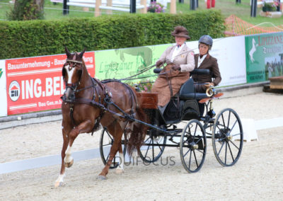 FEI-World-Driving-Championship-for-Singles_2016_Tag2_IMG_6516
