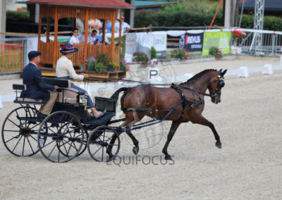 FEI-World-Driving-Championship-for-Singles_2016_Tag2_IMG_6545
