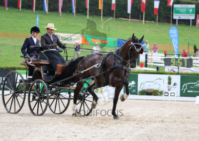FEI-World-Driving-Championship-for-Singles_2016_Tag3_IMG_7094