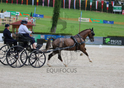 FEI-World-Driving-Championship-for-Singles_2016_Tag3_IMG_7332