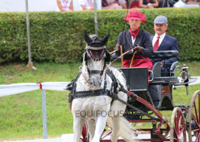 FEI-World-Driving-Championship-for-Singles_2016_Tag3_IMG_8231