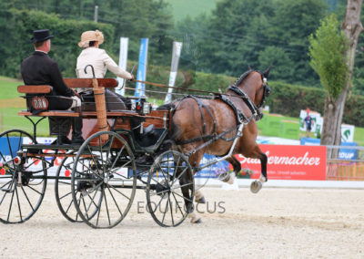 FEI-World-Driving-Championship-for-Singles_2016_Tag3_IMG_8542
