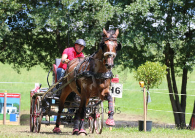 FEI-World-Driving-Championship-for-Singles_2016_Tag4_IMG_0556