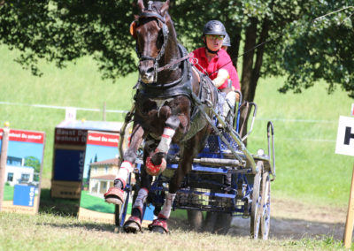 FEI-World-Driving-Championship-for-Singles_2016_Tag4_IMG_0583