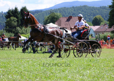 FEI-World-Driving-Championship-for-Singles_2016_Tag4_IMG_0640