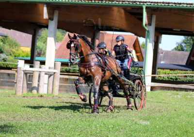 FEI-World-Driving-Championship-for-Singles_2016_Tag4_IMG_0973