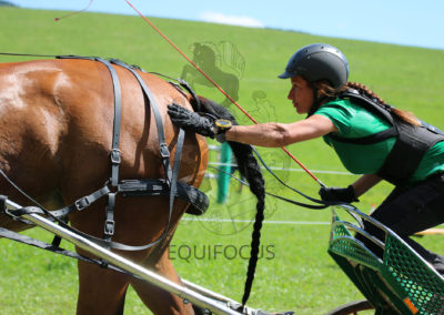 FEI-World-Driving-Championship-for-Singles_2016_Tag4_IMG_9628