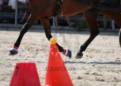 FEI-World-Driving-Championship-for-Singles_2016_Tag5_IMG_1658