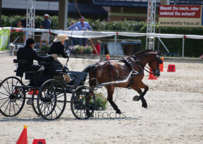 FEI-World-Driving-Championship-for-Singles_2016_Tag5_IMG_1681