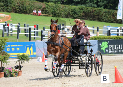 FEI-World-Driving-Championship-for-Singles_2016_Tag5_IMG_2020