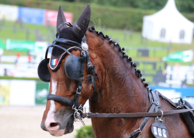 FEI-World-Driving-Championship-for-Singles_2016_Tag5_IMG_2111